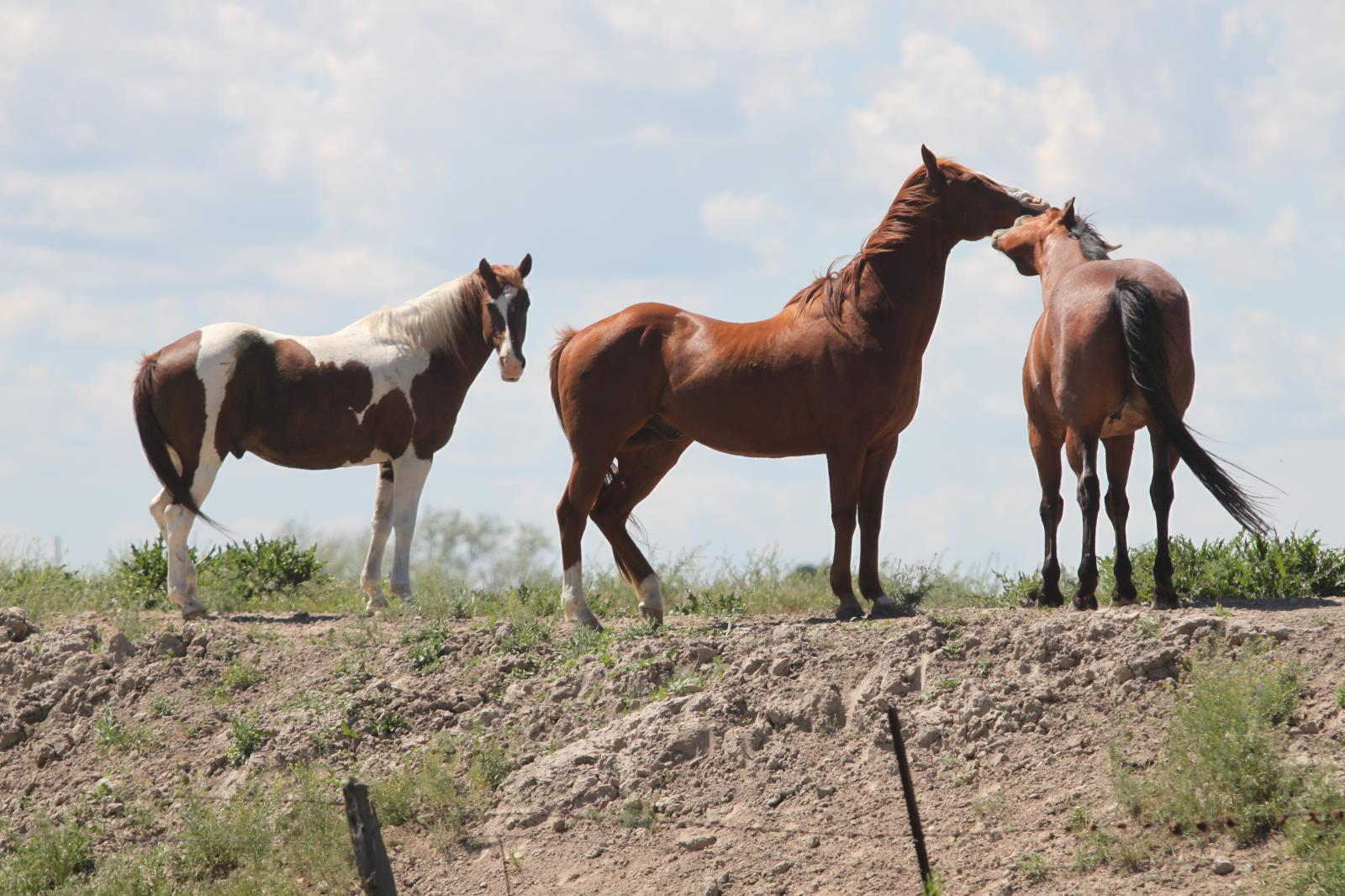 The Idaho State Department of Agriculture has received confirmation of equine infectious anemia diagnosed in a horse that was transported from Washington back to its home in Canyon County in May.