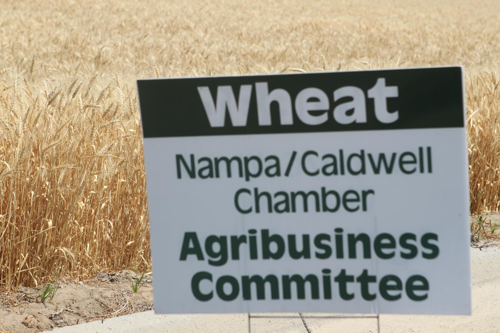 USDA estimates that Idaho farmers planted less potatoes and barley this year but more wheat.