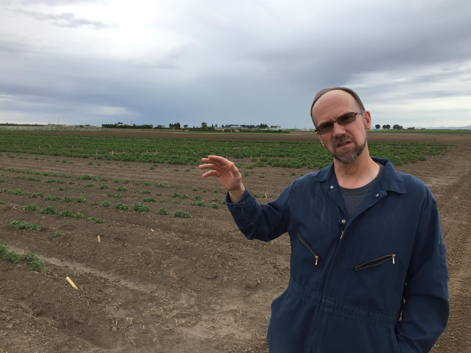 Rich Novy, a potato breeder, plants to plant his first field generation this season of spuds that resist tuber greening. He is shown here in his program's experimental fields in Aberdeen.